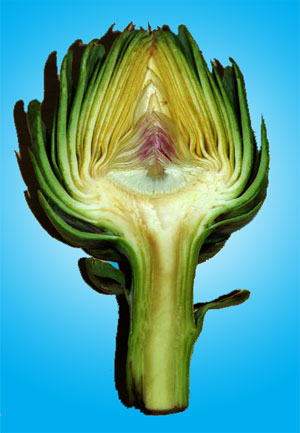 VG99030 Developing strategies to stimulate local consumption, export and import replacement of globe artichokes