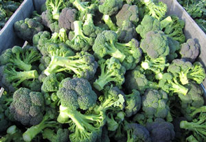 Broccoli to Japan-Supply & Quality