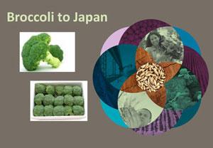 Broccoli to Japan- Phytosanitary Certification