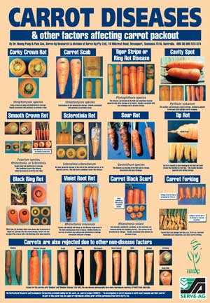 VG96015 Carrot Defects - Poster