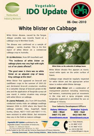 White Blister on Cabbage