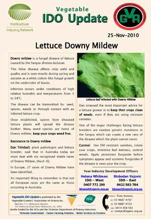 Lettuce downy mildew