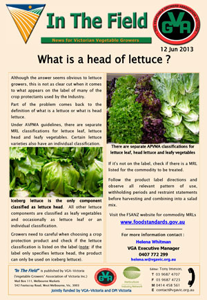 What is a head of lettuce ?