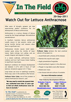 Watch for Lettuce Anthracnose