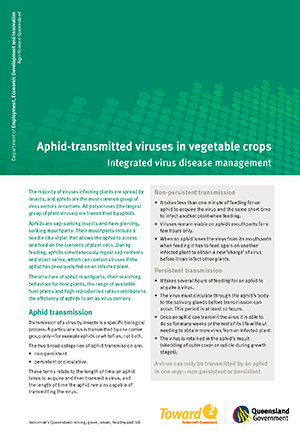 Managment of aphid transmitted viruses