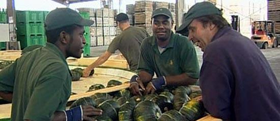 Pacific Seasonal Workers Scheme