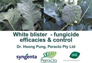Workshop Notes - White Blister 2007