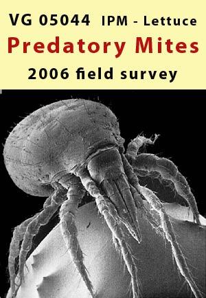 IPM lettuce - field survey of predatory mites - 2006