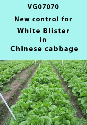 VG07070 - Benchmarking predictive models, new option to control white blister in Chinese Cabbage - 2009