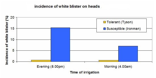 VG07070 - Effect of  Irrigation timing and Resistant cultivars on White Blister