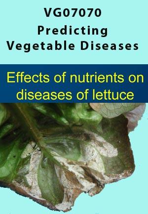VG07070 - Effects of Nitrogen on diseases of lettuce, Downy Mildew & Anthracnose - 2010