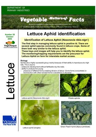 Matters of Facts #28 Lettuce Aphid Identification -October 2005