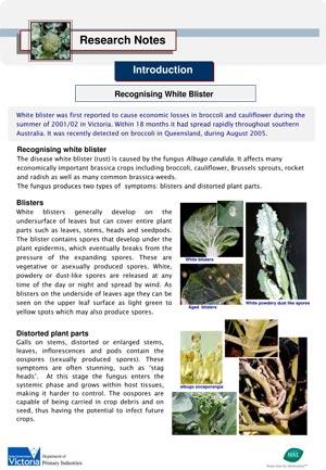 VG04013 Management of white blister - Symptoms 2005