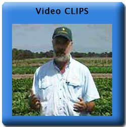 Vegetable Video Clips