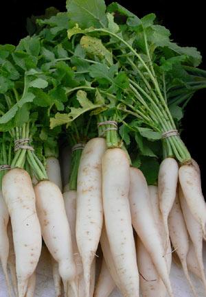 VG97042 New export vegetables: Burdock, Daikon and Shallots