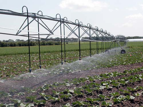Vegetable production is intensive, often requiring large inputs of water and nutrients.
