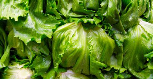 Iceberg head lettuce