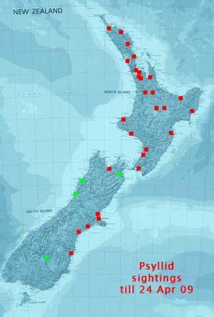 NZ Psyllid sightings